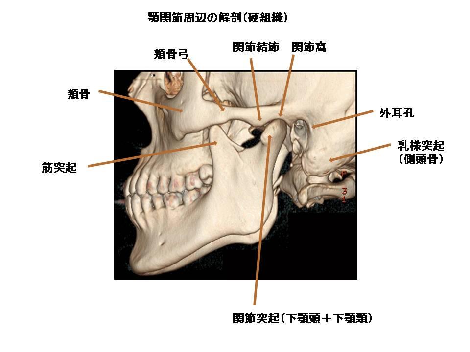 ɡ�関節のmri解剖
